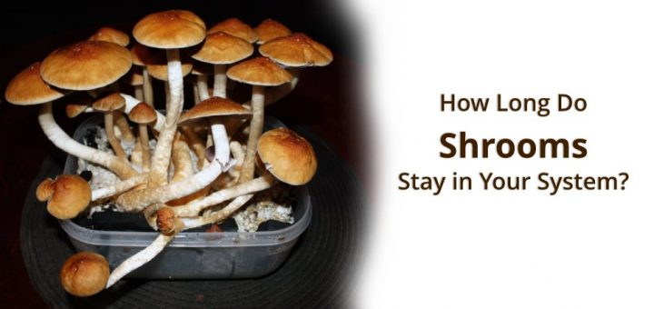 how long do shrooms stay in your system what are their side effects
