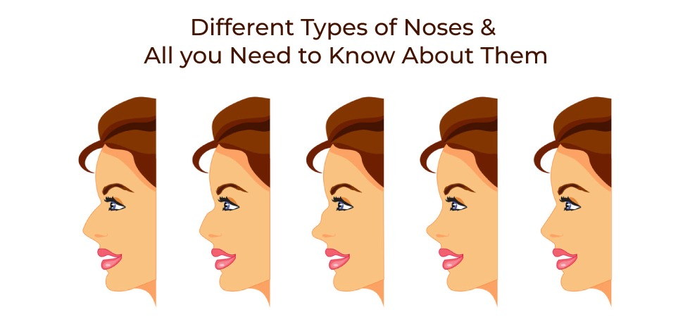 13 Types of Noses and All you Need to Know About Them